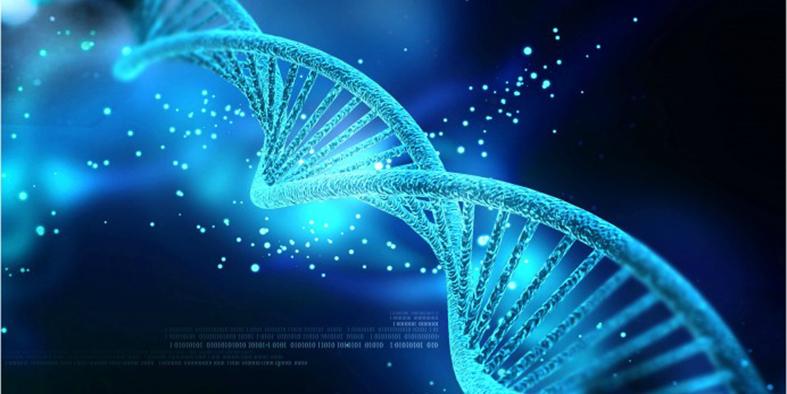 اصلاح ژنتیکی