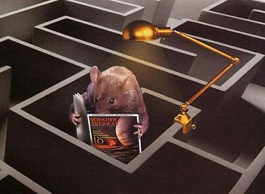 موش با هوش